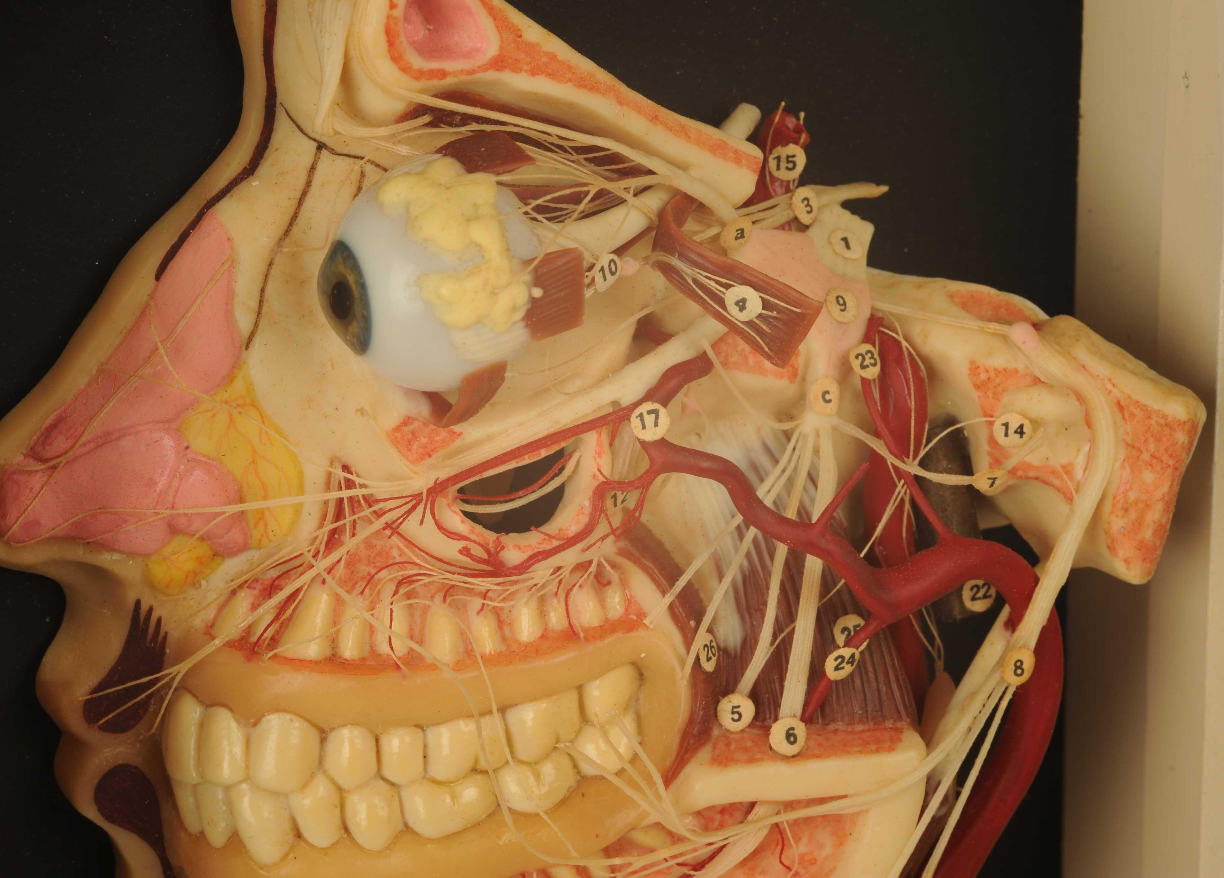 I:\Museums\modesimages\NLC-2010-46imgau.jpg